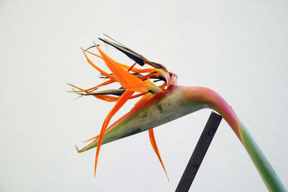 """take care of me"", Bird of paradise and steel, 2015"
