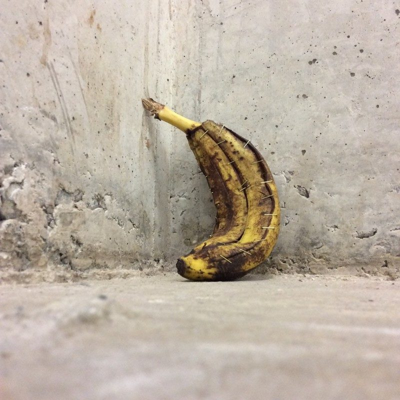 Ways to fix things #7. Banana skin, gold staples, 2015