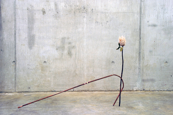 """take care of me"", King protea and copper tube, 2015"